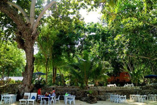 Costa Marina trees