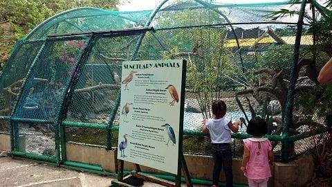 sanctuary animals at Davao Crocodile Park