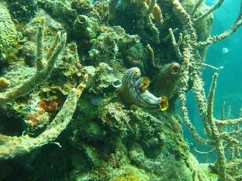 East Tangat Gunboat Wreck