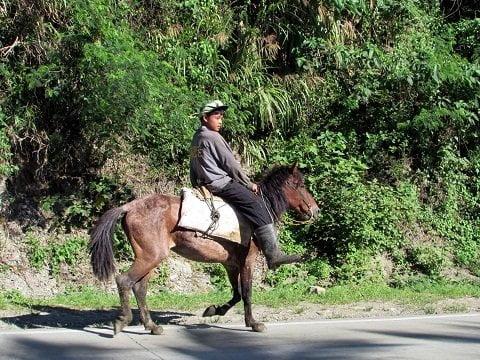 Young Man on Horseback