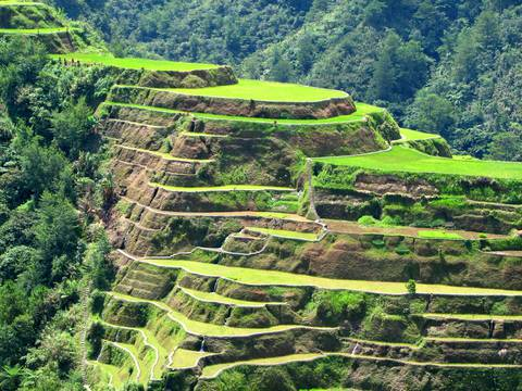 Rice Terraces of the Cordillera Mountain Range.