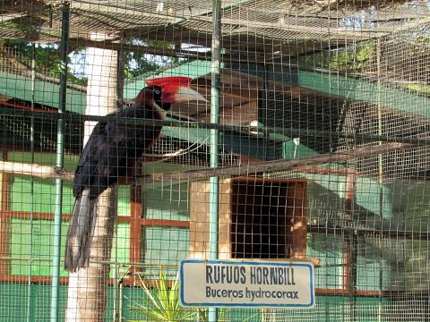 Exotic bird on display in the Bird Country aviary.