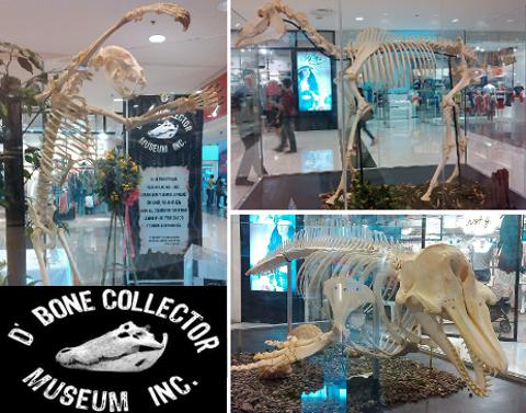 Bone Collector's Museum display in Davao City, Philippines