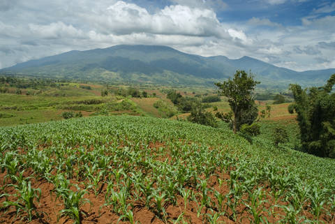 Bukidnon plateau of fertile volcanic soil with a mountain in the background in Mindanao, Philippines.