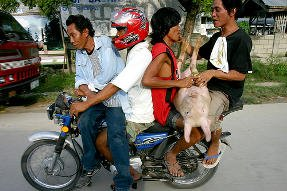 Habal-habal with 4 men and a pig in Davao region Philippines