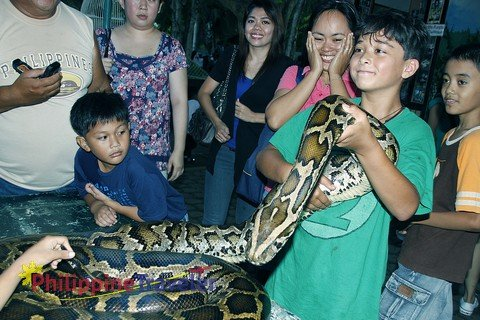 Young boy holding large python at the Davao Crocodile Park.
