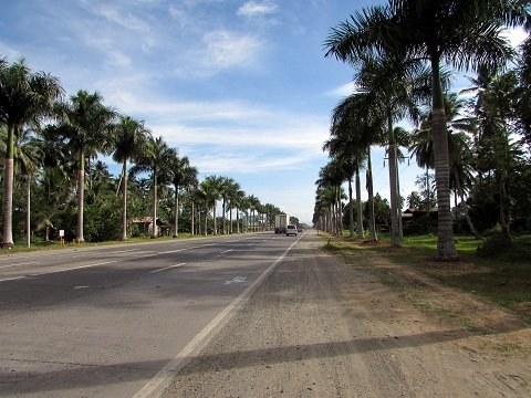 palm-lined highway