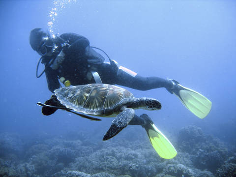Scuba diver swims very close to green sea turtle in the Philippines