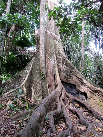 temple-run-tree